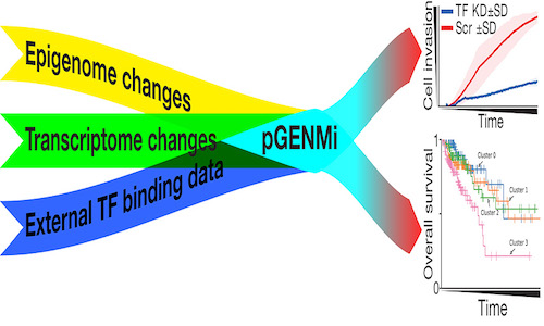 An illustration of the pGENMi model.